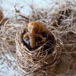 Puparo di mutazione delle larve