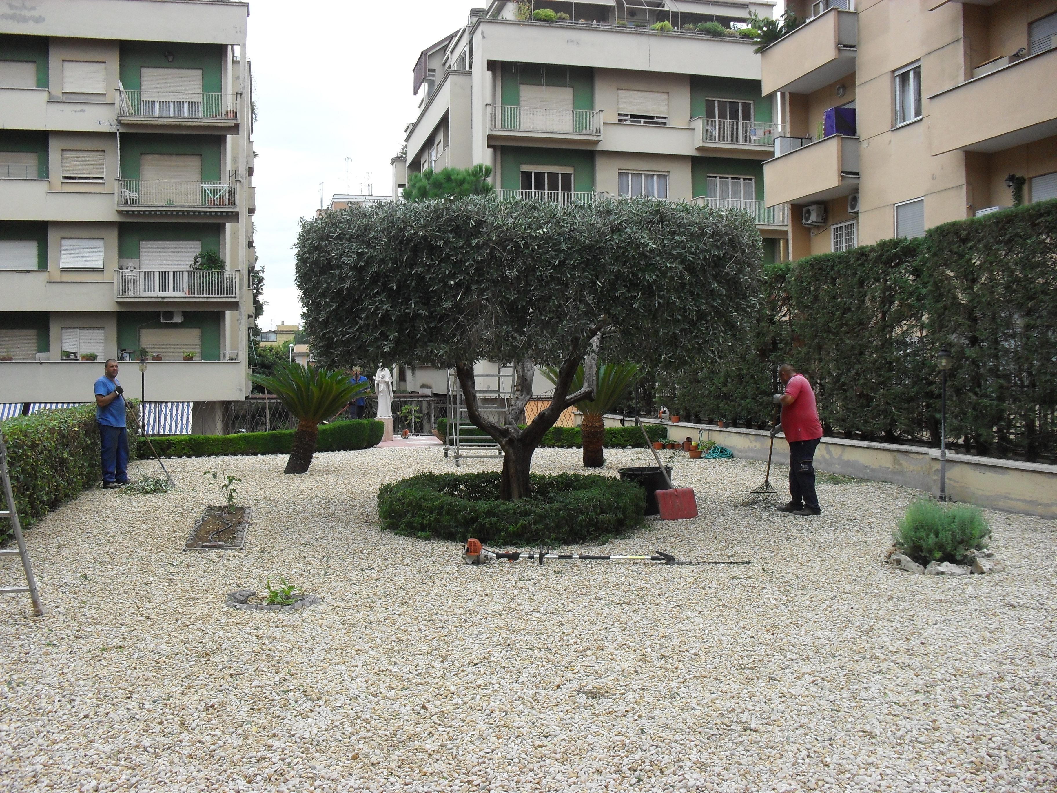 Ulivo potato per un risultato ornamentale cleaneco service for Vendita piante ulivo