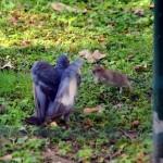 dinfestazione eliminazione ratti e piccioni